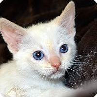 Adopt A Pet :: Harvey - Richmond, VA