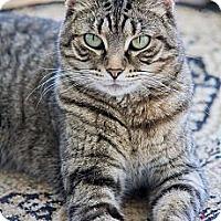 Adopt A Pet :: Jynx - Chicago, IL