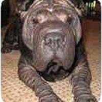 Adopt A Pet :: Ava - Bethesda, MD
