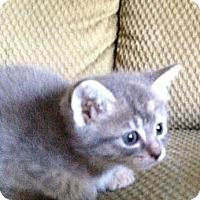 Adopt A Pet :: Spot - Xenia, OH