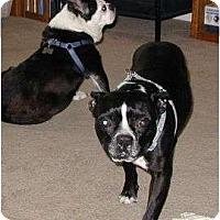 Adopt A Pet :: Finnegan O'Boston - Temecula, CA