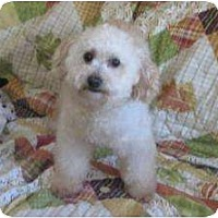 Adopt A Pet :: Lucy ADOPTION PENDING - Antioch, IL