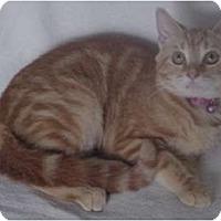 Adopt A Pet :: Madison - Franklin, NC