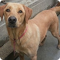 Adopt A Pet :: Blondie(ADOPTED!) - Chicago, IL