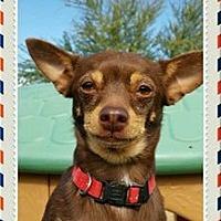 Adopt A Pet :: Mario - Maricopa, AZ