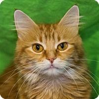 Adopt A Pet :: Lucki - Calgary, AB
