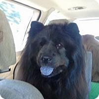 Adopt A Pet :: Mai Mai (Lamay) - Tillsonburg, ON
