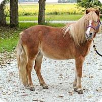 Adopt A Pet :: Peaches - Dewey, IL