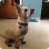 Adopt A Pet :: Jake - Gig Harbor, WA
