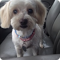 Adopt A Pet :: Tilly - Santa Monica, CA