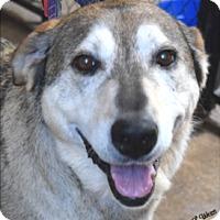 Adopt A Pet :: Aspen - Ogden, UT
