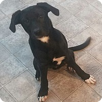 Adopt A Pet :: Froto - Austin, TX