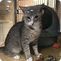 Adopt A Pet :: Clyde - Monroe, GA