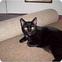 Adopt A Pet :: Sammy - Hesperia, CA