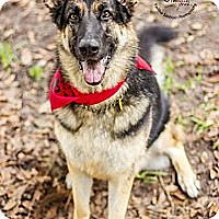 Adopt A Pet :: Lexi - Green Cove Springs, FL