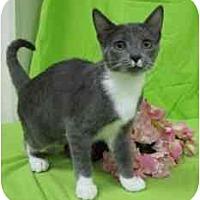 Adopt A Pet :: Leah - Milwaukee, WI