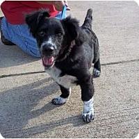 Adopt A Pet :: Lizzy - Adamsville, TN