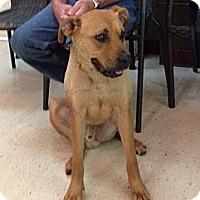 Adopt A Pet :: Indy - Hazard, KY