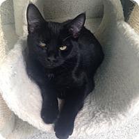 Adopt A Pet :: Pepper - Newport Beach, CA