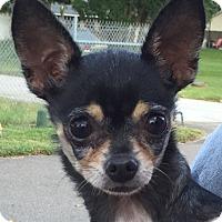 Adopt A Pet :: Candy - Orlando, FL