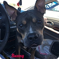 Adopt A Pet :: Bunny - Cheney, KS