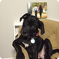 Adopt A Pet :: Molly - PORTLAND, ME