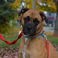 Adopt A Pet :: Dexter - Detroit, MI