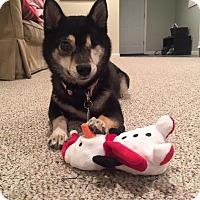 Adopt A Pet :: Mako - Manassas, VA