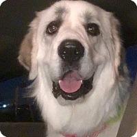 Adopt A Pet :: Aspen***MEDICAL HOLD*** - Lincoln, NE