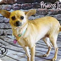 Adopt A Pet :: Princess Leia - Newport, KY