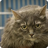 Adopt A Pet :: Ming - Gardnerville, NV