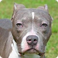 Adopt A Pet :: Roxy - Englewood, FL