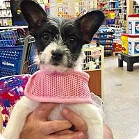 Adopt A Pet :: Pearl - Brea, CA