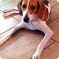 Adopt A Pet :: Annie - Baton Rouge, LA