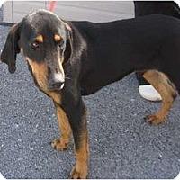 Adopt A Pet :: Stanley - Harrisburgh, PA