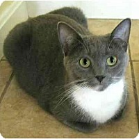 Adopt A Pet :: ValleyGirl - Plainville, MA