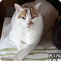 Adopt A Pet :: Ruby - Lancaster, MA