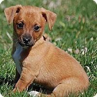 Adopt A Pet :: Adam - Providence, RI
