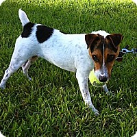 Adopt A Pet :: Sadie in Houston - Houston, TX