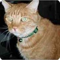 Adopt A Pet :: Tinker - Pasadena, CA