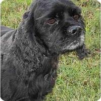 Adopt A Pet :: Chloe - Sugarland, TX