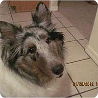 Adopt A Pet :: Tiffany - apache junction, AZ