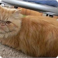 Adopt A Pet :: Red Rosie - Beverly Hills, CA