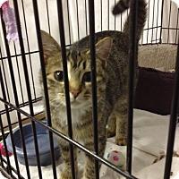 Adopt A Pet :: Fawn - Byron Center, MI