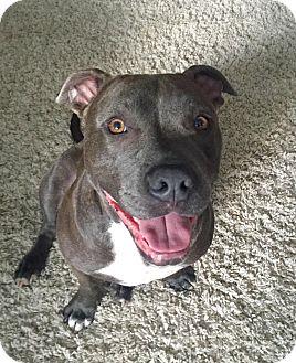 Terrier (Unknown Type, Medium) Mix Dog for adoption in Detroit, Michigan - Louie