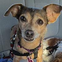 Adopt A Pet :: Hannah - Rancho Santa Fe, CA