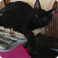 Adopt A Pet :: Puddin - Hammond, LA