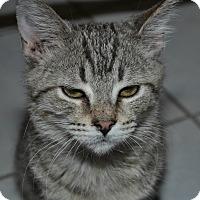 Adopt A Pet :: Hern - Columbus, OH