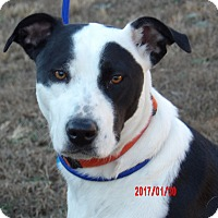 Adopt A Pet :: Gypsy(60 lb)Perfect Family Pet - Niagara Falls, NY