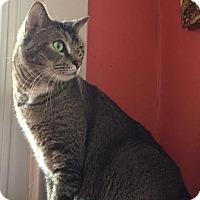 Adopt A Pet :: Beck - Alexandria, VA